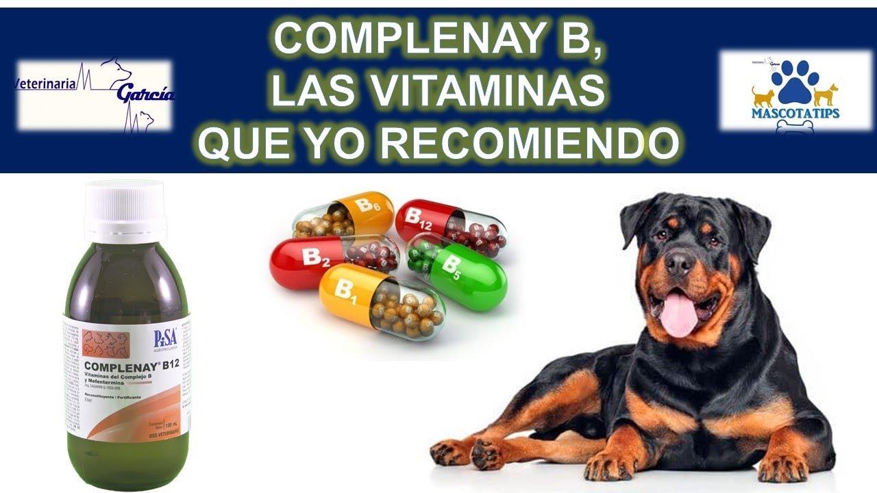 vitamina b alimentos para perros