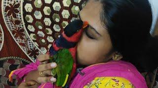 parrot talking റെഡ്മി &റോക്കി പ്ലയിങ് ഊഞ്ഞാൽ കെട്ടി നോക്കിയത
