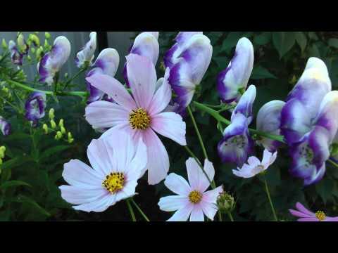 Цветы в утренней росе
