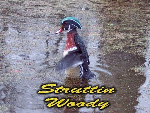 Struttin Woody by