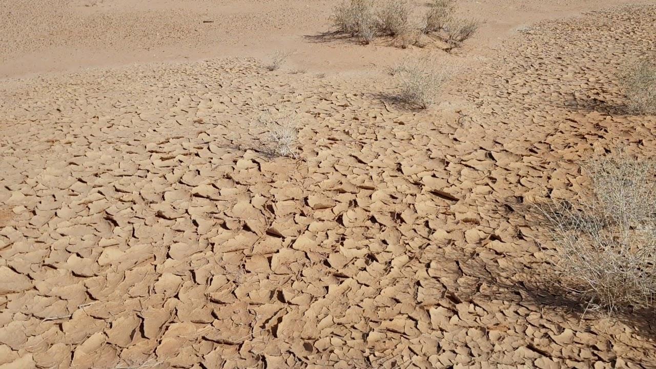 محمد بنونة كتاب التعايش مع الصحراء pdf
