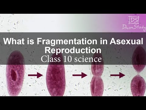 What is Fragmentation in Asexual Reproduction | Dronstudy