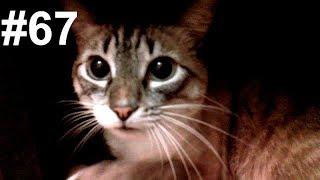 Дом-2 для уличной кошки и его тестирование моими котами