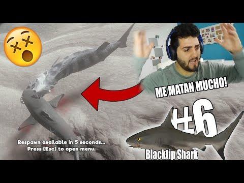 Feed and Grow: Fish SURVIVAL Great Map #6- Blacktip Shark ESTE TIBURÓN ES MUY MALO, ME ENFADA MUCHO!