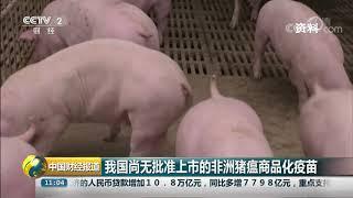 [中国财经报道]我国尚无批准上市的非洲猪瘟商品化疫苗| CCTV财经