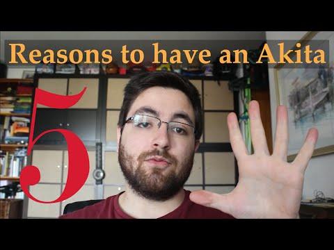 5 reasons to have an Akita - by Yuki the Akita Inu
