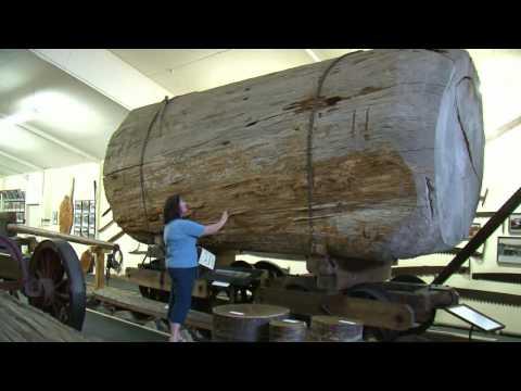 The Kauri Museum, Matakohe, Northland, New Zealand - 1 min 3 secs
