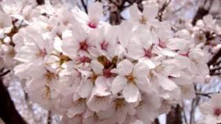奥華子 楔(ピアノ伴奏版).wmv