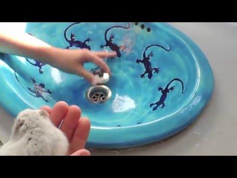 pets house comment laver un hamster