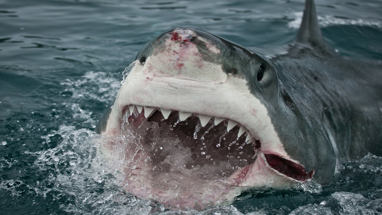 25 facts about sharks terrors of the ocean youtube
