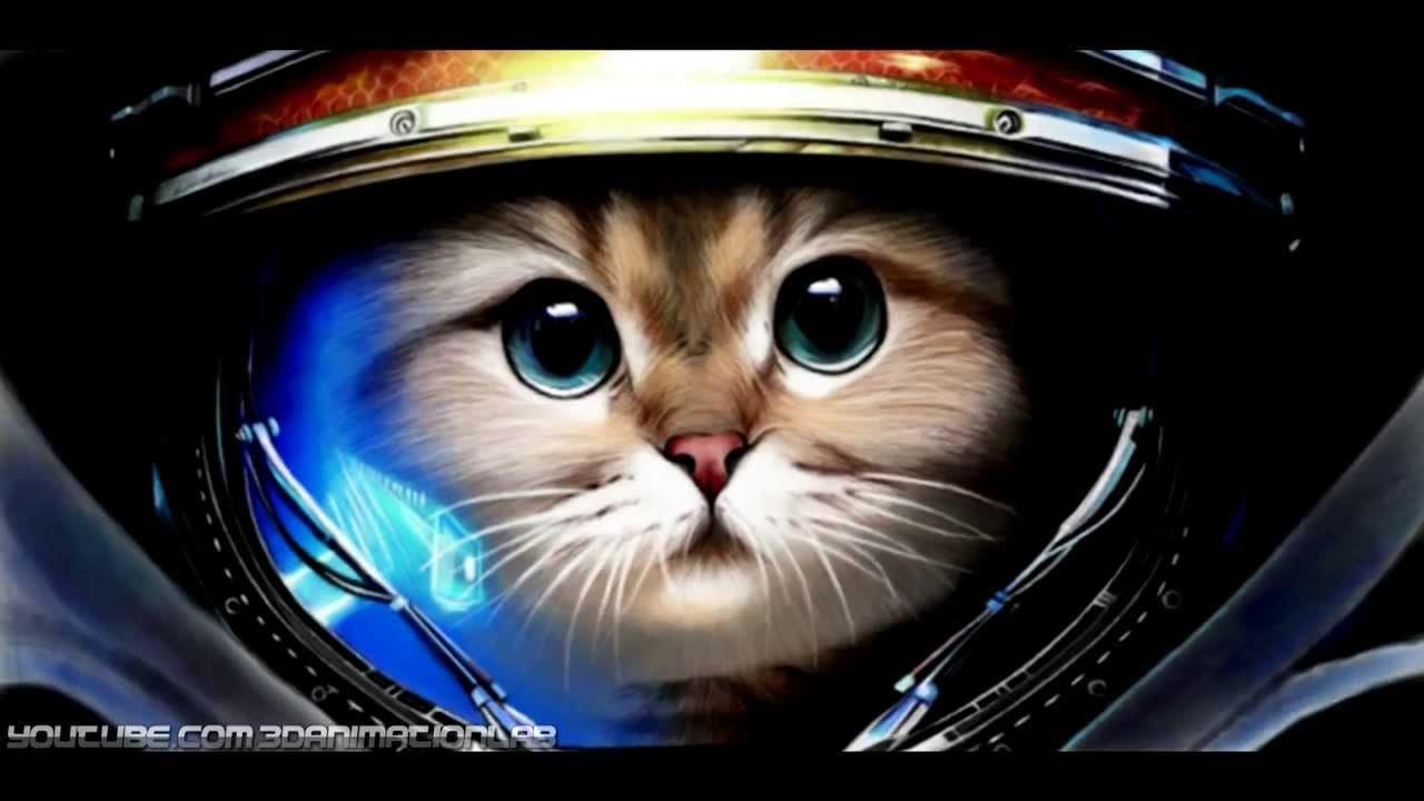 Фильм для котов на ютубе