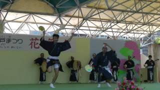 神戸まつり5Awa Dance Festival