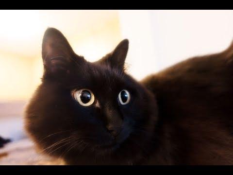 ねこが猫をかぶったらこうなった!Theo pretended to be a cat. - YouTube