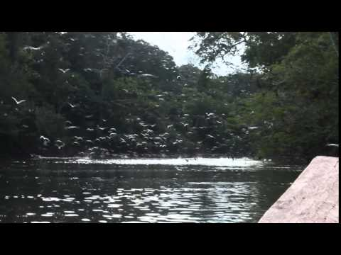Reserva Nacional Pacaya Samiria- tropical adventures & expeditions