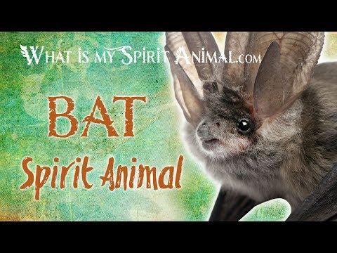 bat-spirit-animal-|-bat-totem-&-power-animal-|-bat-symbolism-&-meanings