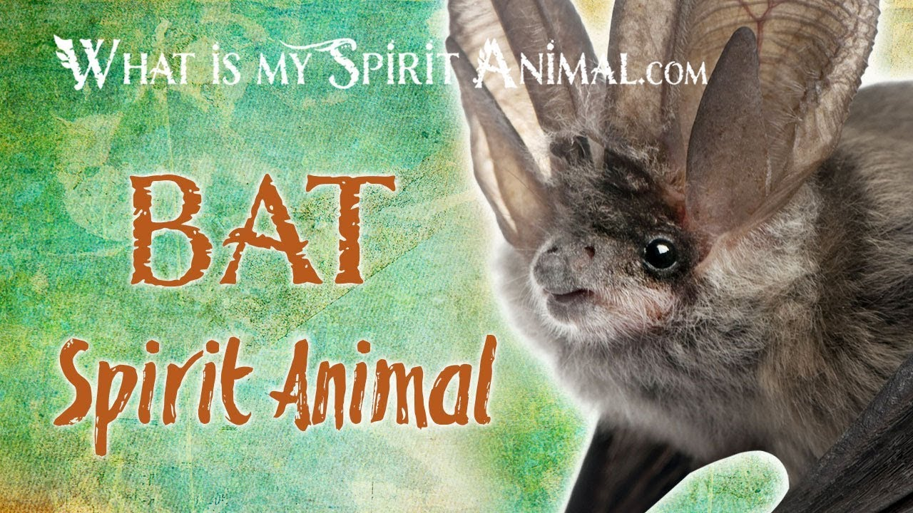 Bat Spirit Animal Bat Totem Power Animal Bat Symbolism