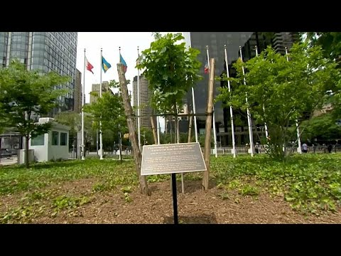 France 24:Watch: Anne Frank tree planted at UN headquarters