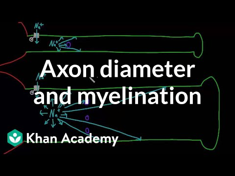 Effects of axon diameter and myelination | Nervous system physiology | NCLEX-RN | Khan Academy