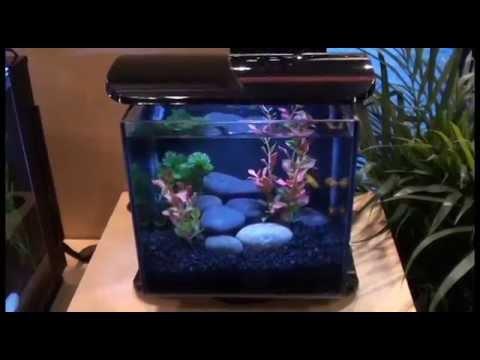 Marineland Silhouette Aquarium Desktop Kit - YouTube