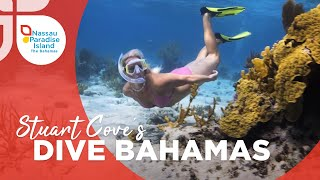 Nassau Paradise island | Dive in with Stuart Cove's Dive Bahamas
