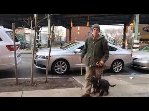 Off Leash Dog Training with E collar Technologies mini educator