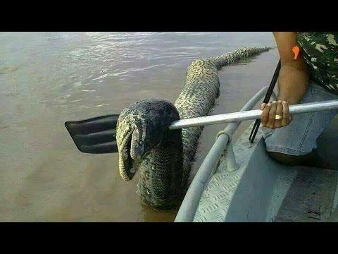 ตำนานพญานาค งูใหญ่ มีจริงหรือไม่