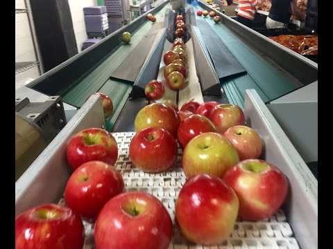 Sights and Sounds of How Pennsylvania Apples are Harvested and Packed