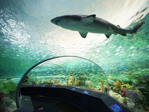 Ripley S Aquarium Myrtle Beach Sc 06 19 14