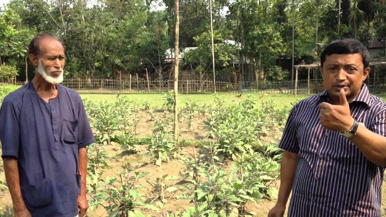Bt brinjal in Bangladesh – the true story – Mark Lynas