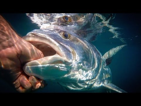 Fishing For GIANT Roosterfish In Costa Rica