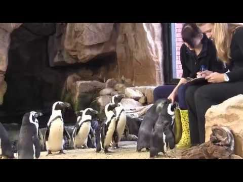 Two Oceans Aquarium: Feeding time at Penguin Beach