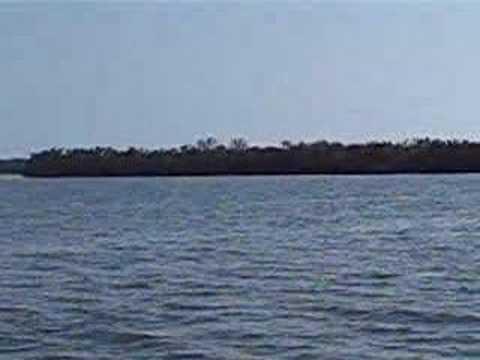 Mangroves 5568