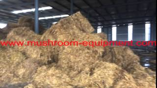 the raw materials straw materials to cultivate mushroom