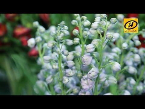 Зелёный дом: цветы для мужчин