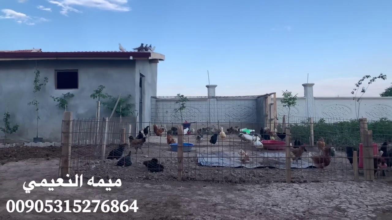 عودة العوائل العراقيه من تركيا 2020الى العراق رغم سوء الاوضاع بالعراق🤔ما هو السبب🇹🇷كيف التصال بنا