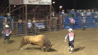 Rodeo Bull Riding Watch Bull Fighters Chased By Mad Bulls