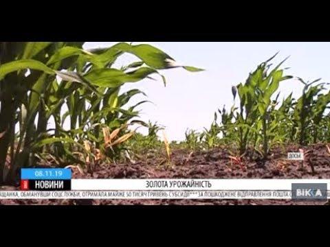 ТРК ВіККА: Черкащина у лідерах країни за врожайністю зернових та бобових культур