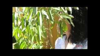 TRƯNG VƯƠNG Khung Của Mùa Thu.  Lời Việt NS: Nam Lộc. Trình Bầy Bởi  Mã Yến Oanh