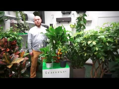 ARTPLANTS - влаголюбивые растения