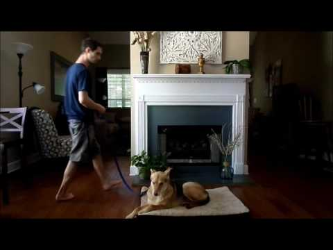 How to Teach Your Dog the Place Command - Dog Trainer Peachtree City Ga