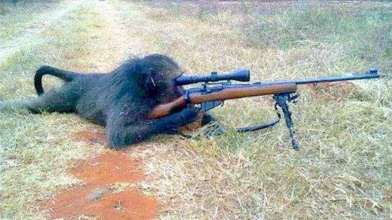 11 Animals Used in Battle