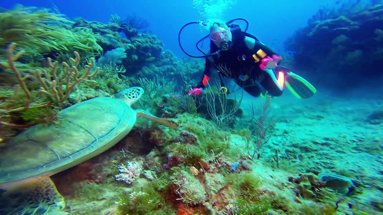West Palm Beach Dives May 2017 Jupiter