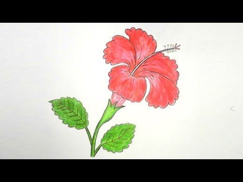 How  to draw Hibiscus Flower step by step ||very easy||
