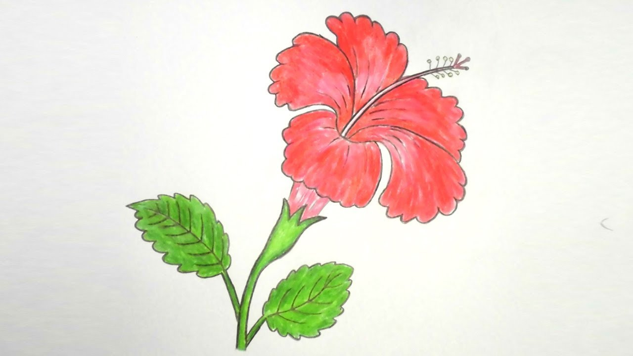 How To Draw Hibiscus Flower Step By Step Very Easy Youtube