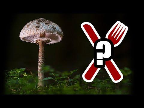 Bushcraft Ask Me Anything (Ep.1): Edible Mushrooms, Flint & Steel, Making a Kuksa and Natural Tinder