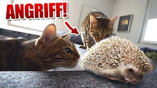 Murky & Dexter greifen IGEL an!