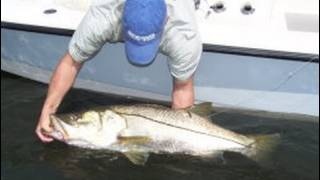 Monster Snook! Largest Snook Ever Broadcasted Stuart, Florida