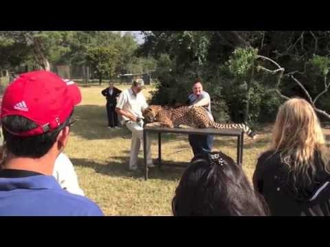 Moholoholo Animal Rehabilitation Centre