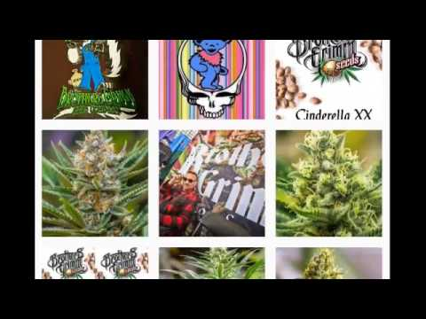 Wake & Bake America 427 With Special Guest Mr. Soul From Brothers Grimm Seeds