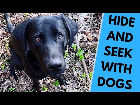 Playing Hide and Seek With Dog Benefits